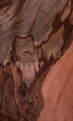 Черепаховое-дерево